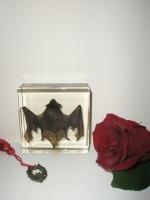 Φυλακτό Αληθινή - Νυχτερίδα