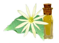 Αιθέριο Έλαιο Ylang - Ylang (Cananga Odorata)